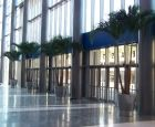 Adonidia Palms at Entrance to Amway Center, Orlando Magic