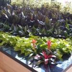 Seaside Atrium Plants