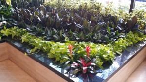 Seaside Atrium Plants