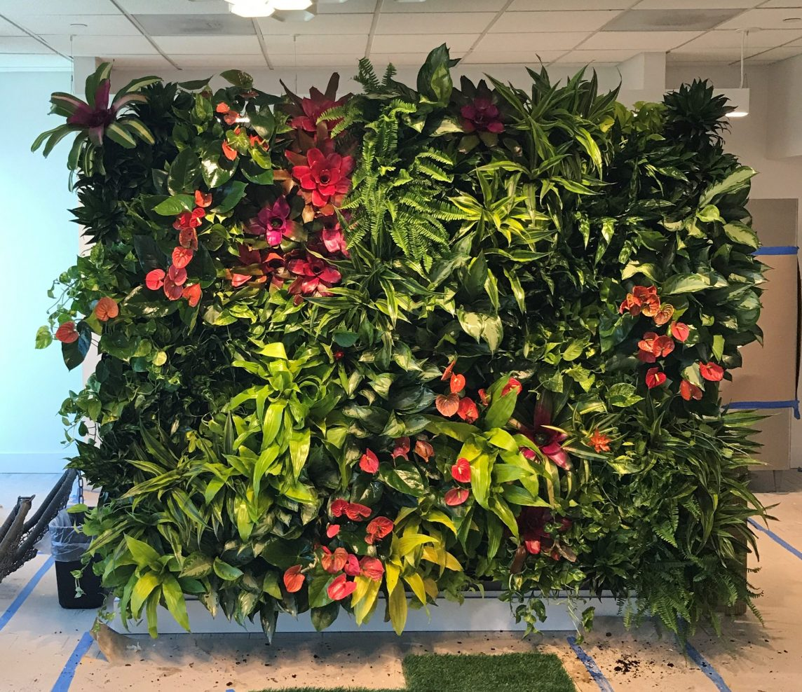 Living green wall design for commercial and residential - How to make a living wall ...