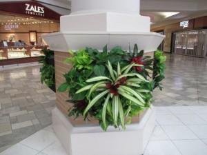 Green Wall on Mall Column