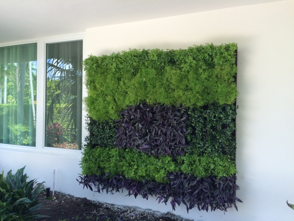 Green Wall with contrasting foliage and textures