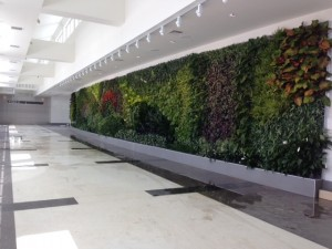 Green Wall in Office Building