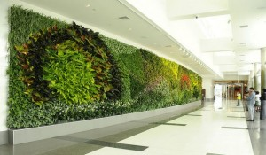Living Green Wall in Office Building