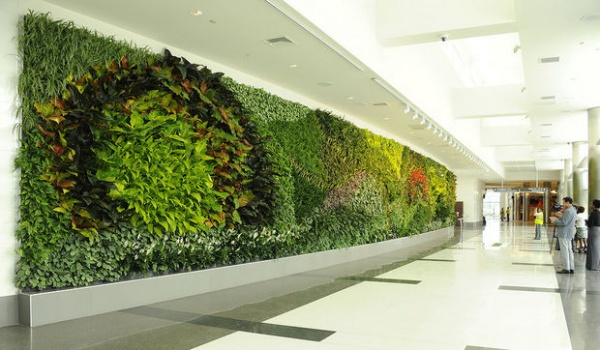 Green Wall In Office Building Living Green Wall In Office Building ...