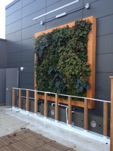 living wall installed in building
